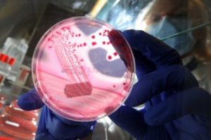 Superbugs Destined for Australia